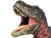 Dinosaur Calgary Businesses